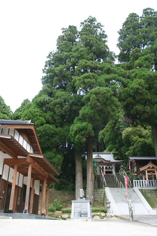 脊振神社の杉